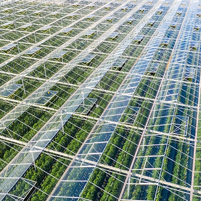 Industries Served - Greenhouse & Growhouse Monitoring